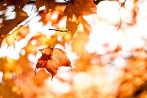 Fall Events in Livingston County